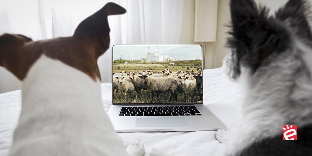 De perros y ovejas: Teletrabajo